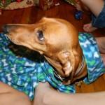 DIY Dog Deodorizer