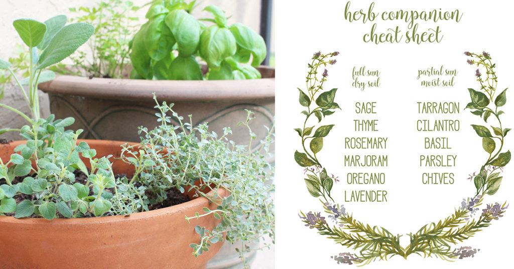 Herb companion cheet sheet image