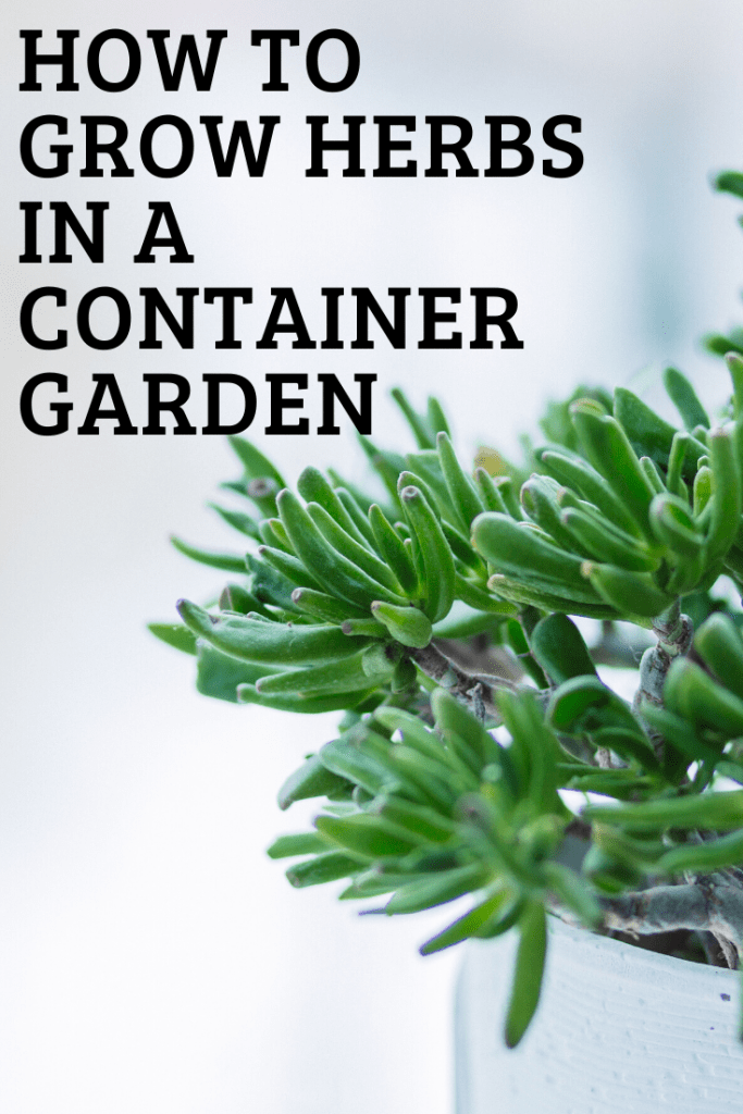 How to grow herbs in a container garden