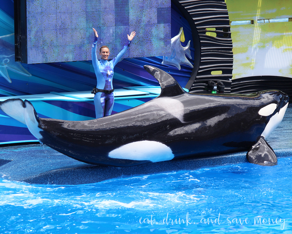 Sea World Review Shamu show with trainer