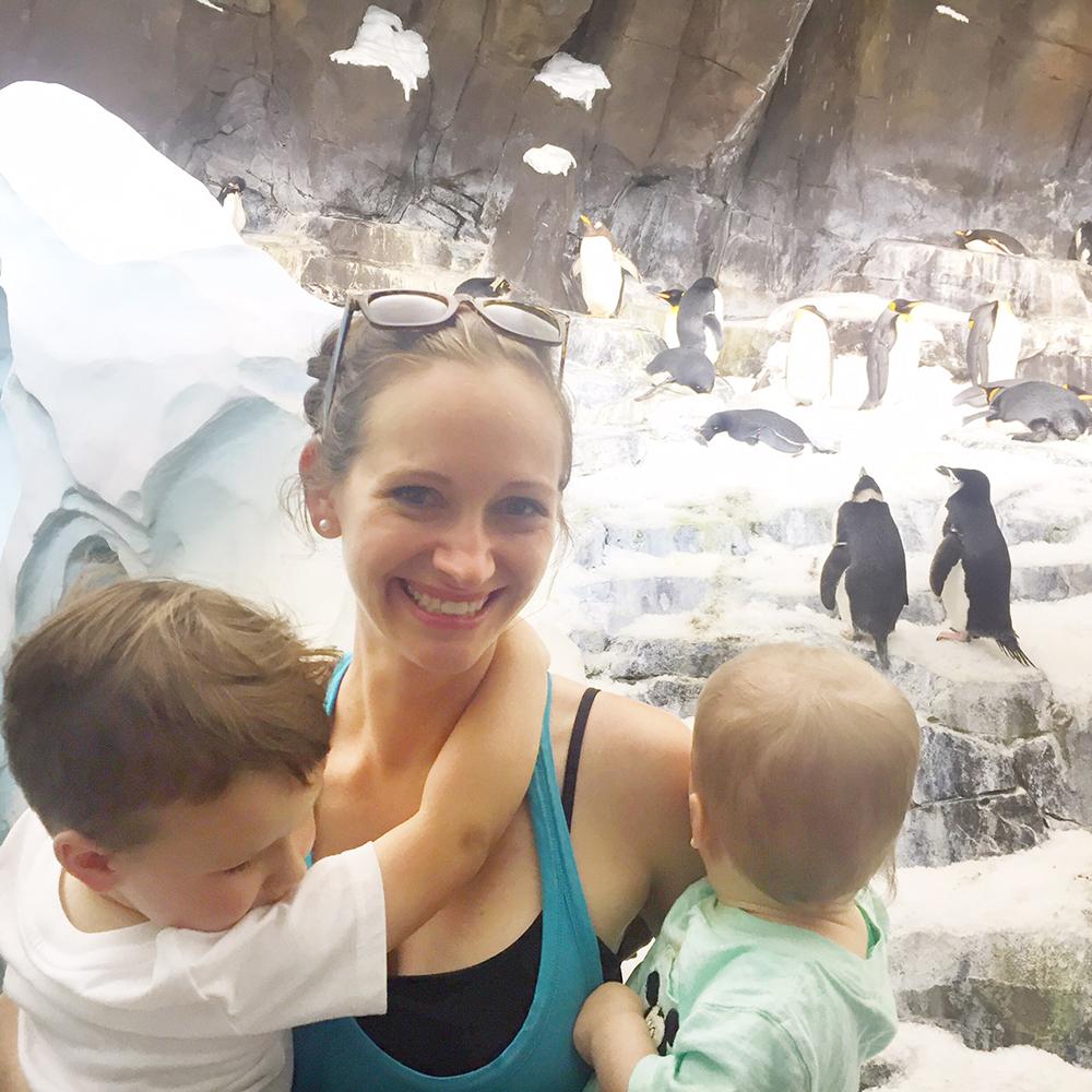 Sea World penguins