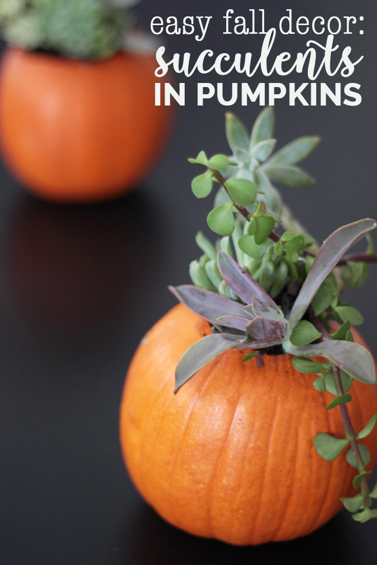 Want some easy fall decor to keep pumpkins around after Halloween? Check out this easy fall decor tip for planting succulents in pumpkins.
