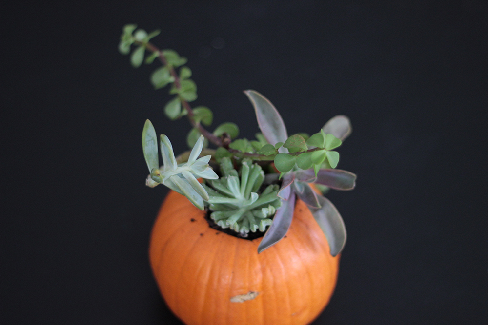 Fall succulents in pumpkins