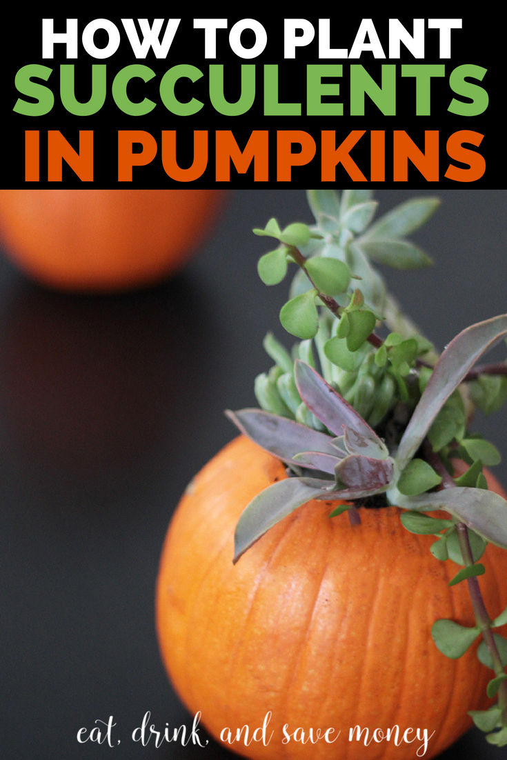 How to plant succulents in pumpkins. Easy DIY Fall container garden. #gardening #fall #succulents #succulent