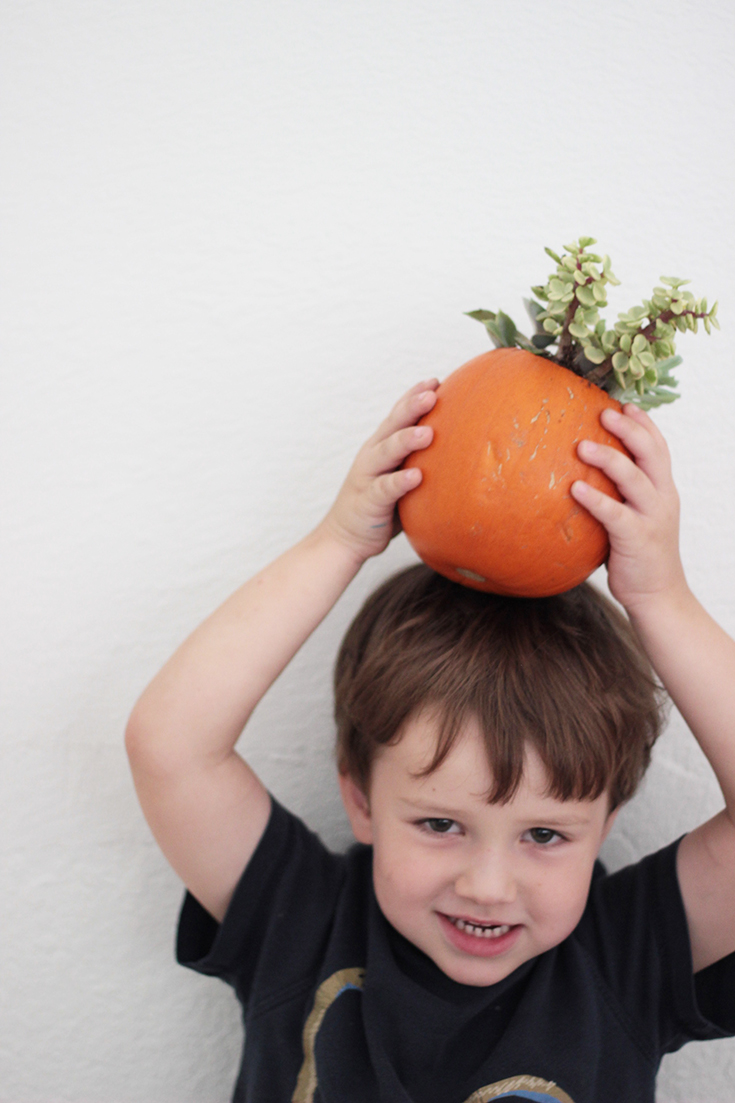 Robert loves the succulent pumpkin planter he made