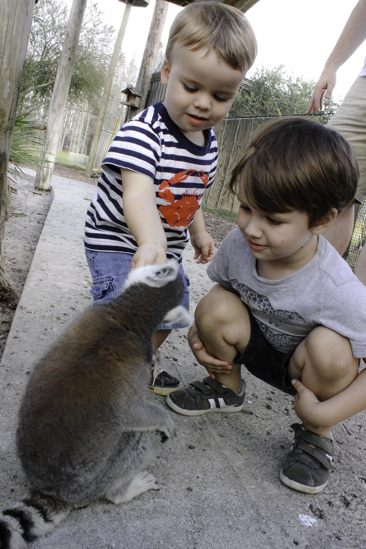 Jackson and Robert love feeding the lemurs