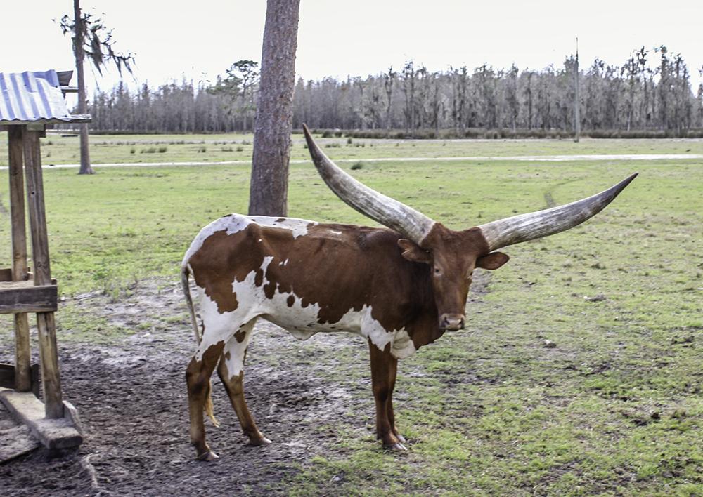 Wild game at Safari Wilderness Ranch
