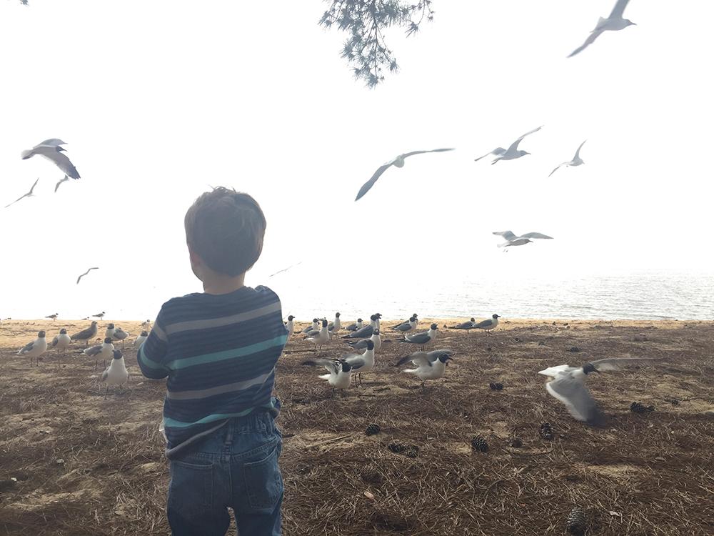 Robert feeding the birds by the bay in Fairhope