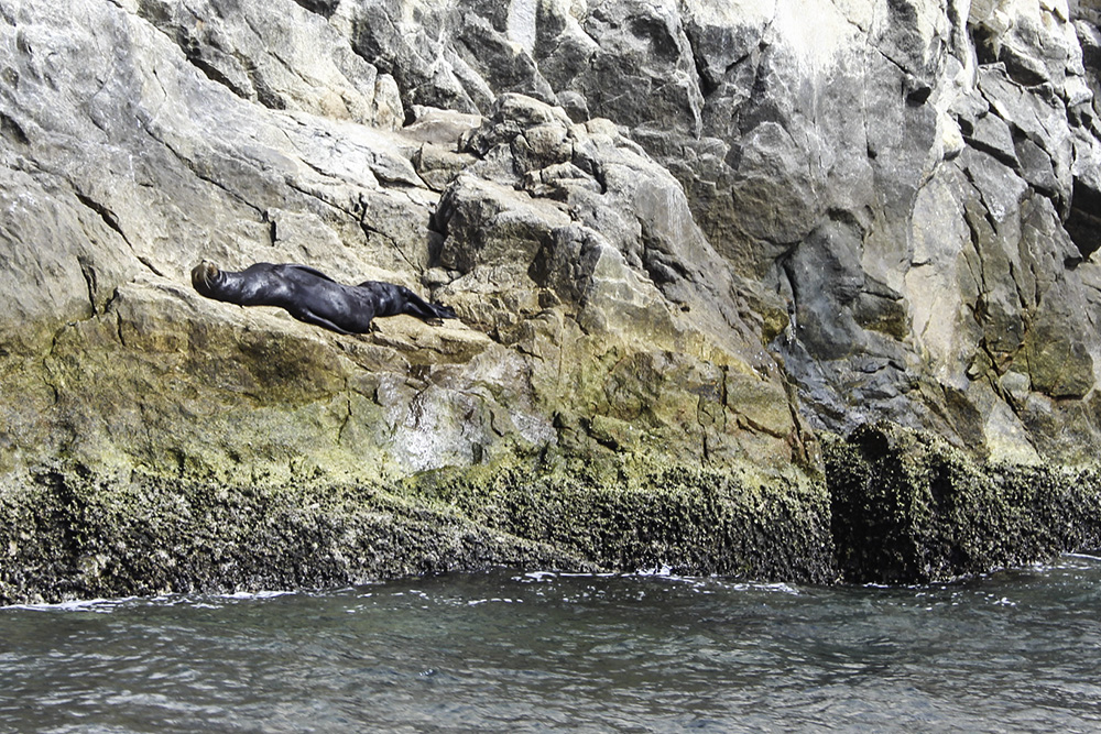 sea lion in cabo