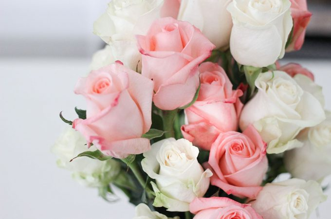 Beautiful roses from VivaRoses- farm fresh roses delivered to your door