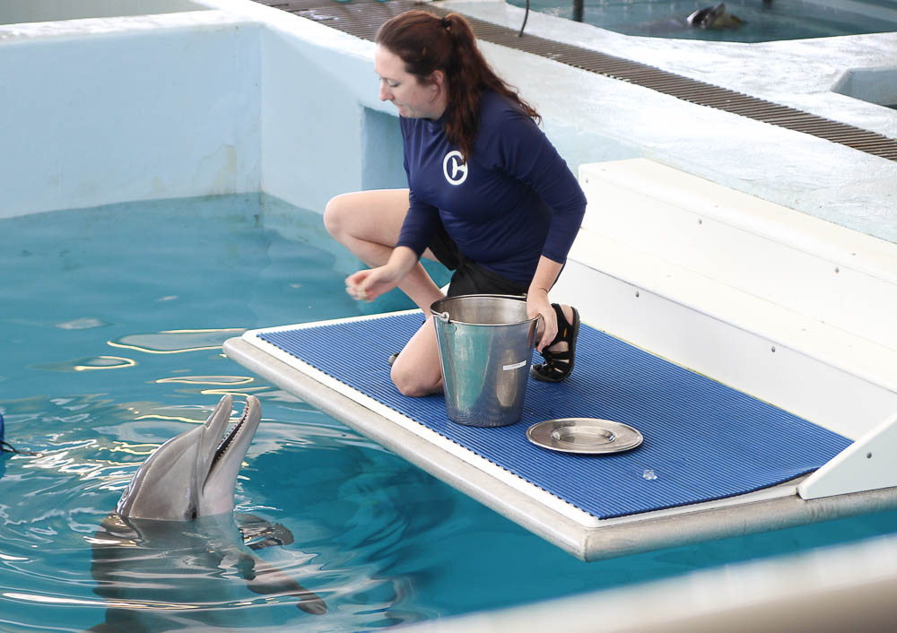 Winter the dolphin Clearwater Marine Aquarium -1