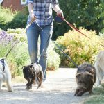 How to Make Extra Income as a Pet Sitter