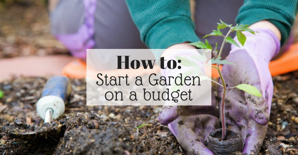 How to start a garden on a budget