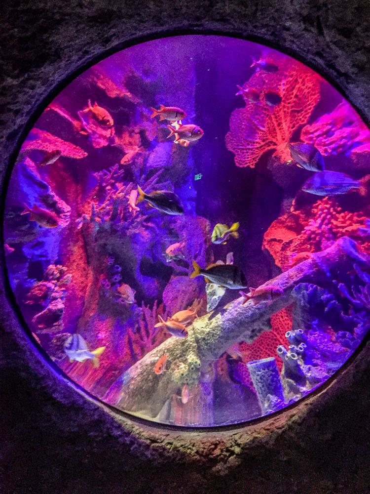 Explore I-Drive 360 with kids in Orlando and visit SEA LIFE Aquarium