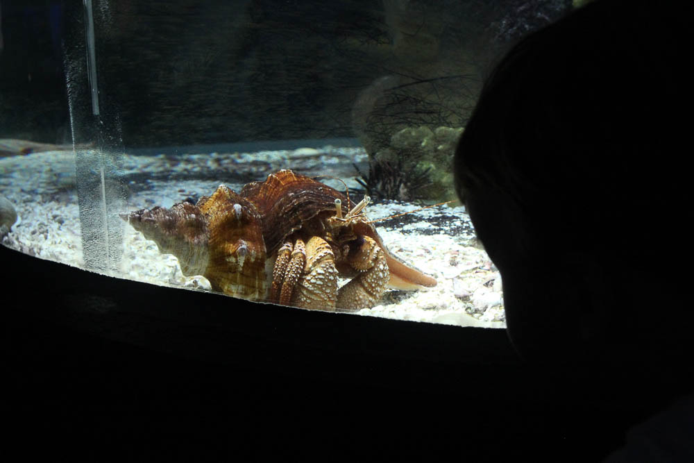 The kids loved exploring The Florida Aquarium with Tampa Bay CityPASS