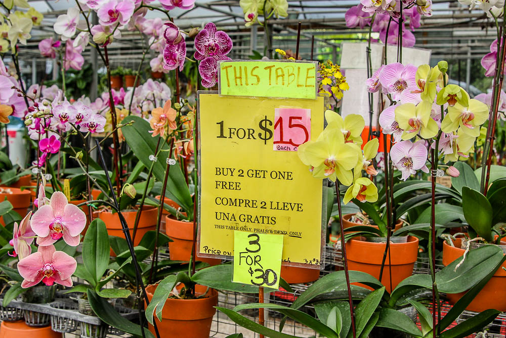 cheap orchid in Homestead FL