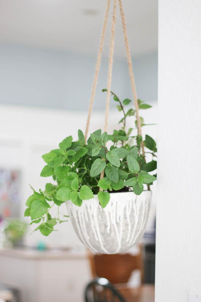 Hanging herb garden in kitchen-4