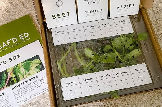Leaf'd box garden review